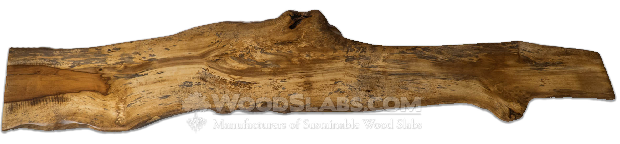Chinese Tallow Wood Slabs