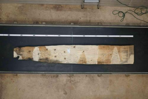 Norfolk Island Pine Wood Slab #EFO-ZB2-3ZWX