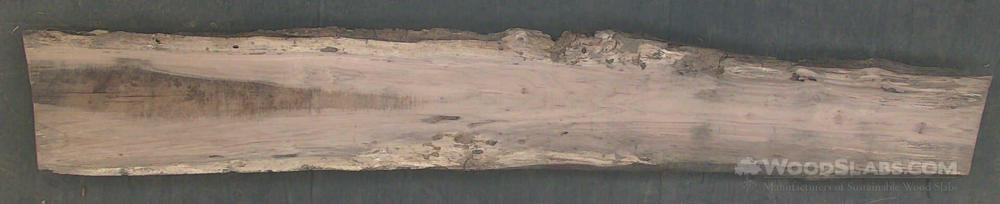 Laurel Oak Wood Slab #GIZ-DGH-8JTM