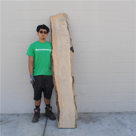 Podocarpus Wood Slab #CA2884