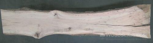 Laurel Oak Wood Slab #DEB-SXR-51FZ