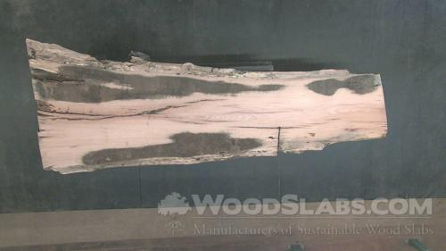 Laurel Oak Wood Slab #HGY-VZV-5WQN