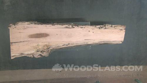 Laurel Oak Wood Slab #OT7-V0S-4RK1
