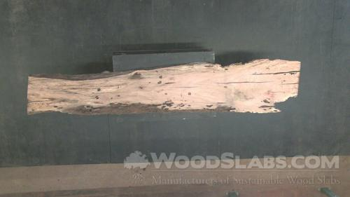 Laurel Oak Wood Slab #FJJ-LBJ-DRQ0