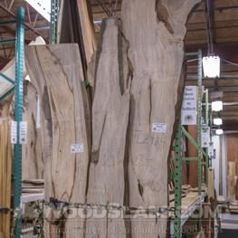 Banyan (Cuban Laurel) slab