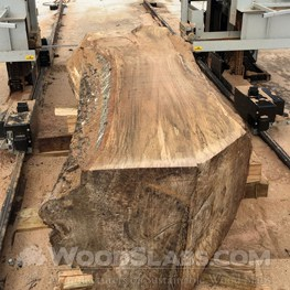 live oak wood slab