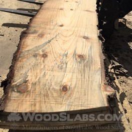 norfolk island pine wood slab