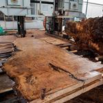 misc rare wood slabs