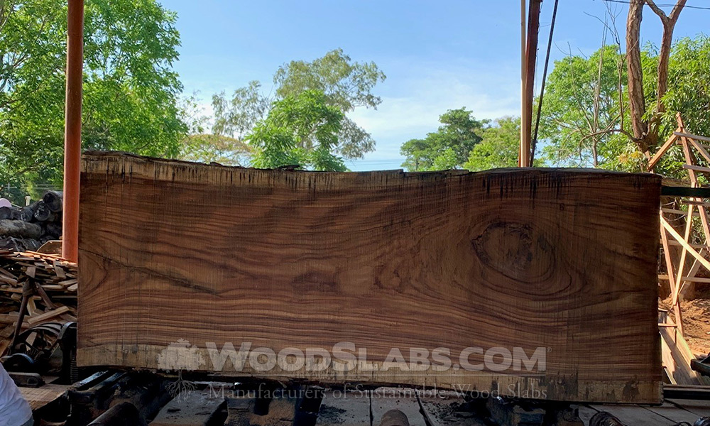 Parota Wood Slabs