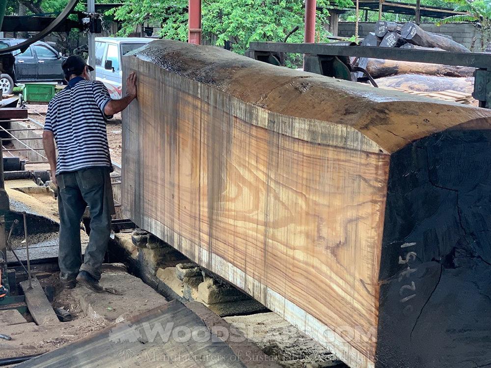 parota log being cut